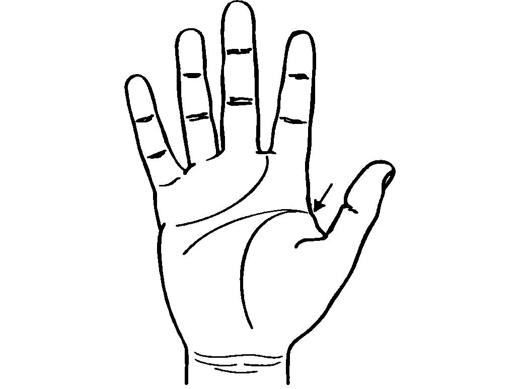 Линии руки картинки для детей